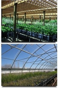 Washoe State Tree Nursery
